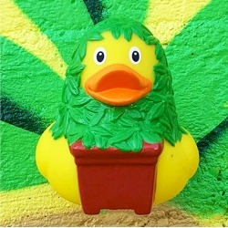 Rubber Duck Cannabis LILALU  Lilalu